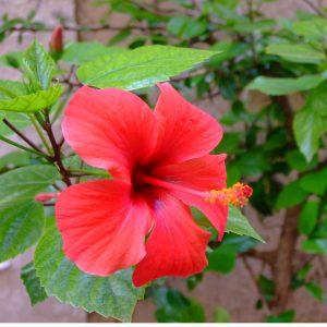Blüte Yoni Muschirunde